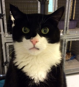 Tux the black and white cat says Hello!